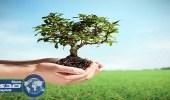 أمانة الأحساء تفعل مبادرة لزراعة مليون شجرة