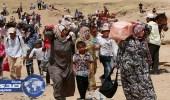 مسؤول يمني: مشكلة النزوح لن تحل سوى بتحقيق سلام