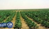 خلو عينات المنتجات الزراعية من متبقيات المبيدات