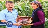 بالفيديو والصور.. تركي يزرع ذرة ملونة
