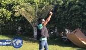 بالفيديو.. محمد رمضان يطلق النار فى حديقة منزله