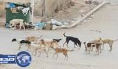 أعضاء بالشورى يثمنون دور قطط وكلاب الشوارع