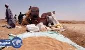 مصر تأمر بغربلة شحنة القمح الفرنسي المحتجزة