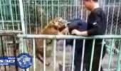 فيديو صادم لحارس حديقة يصارع نمرا صغيرا