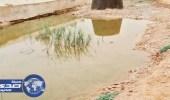 مياه حائل تتبرأ من ثعابين وعقارب وادي الأديرع