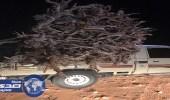 ضبط مخالفة احتطاب نبات الأرطى بمحمية التيسية