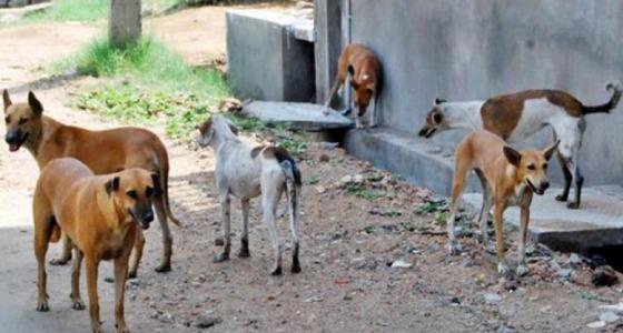 أمريكية تدفع 60 ألف جنيه لنقل كلاب ضالة من مصر إلى نيويورك