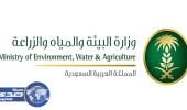 فصل المياه والصرف الصحي عن المتعثرين بالسداد من القطاع التجاري