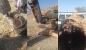 بالفيديو.. وافدين يقطعون أشجار معمرة متجاوزين الأنظمة