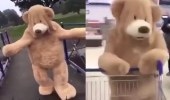 بالفيديو.. فتاة تتحول لدب ضخم يتجول في الشوارع