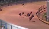 بالفيديو.. كلب يخسر في سباق قبل لحظات من نهايته بسبب بطة