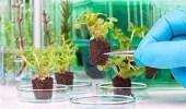 """برنامج أمريكي لتحويل النباتات إلى """" جواسيس """" لهذه الأغراض"""