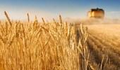 """"""" الحبوب """" تتم ترسية الدفعة السابعة من الشعير العلفي المستورد لهذا العام"""