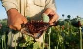 الجيش الأمريكي يشن ضربات عسكرية على منشأت زراعة الأفيون بأفغانستان