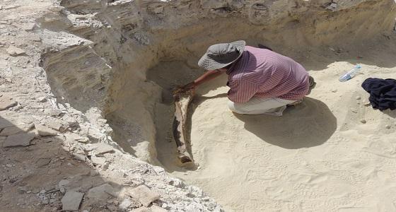 الكشف عن بقايا حيوانات ثديية عاشت قبل 500 عام شرق تيماء