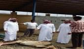 بلدية بحر أبو سكينة تضبط حظيرة بها حاشي مريض مذبوح