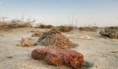"""بالصور.. تعرف على أسرار ميناء """" السّرِّين """" بمكة الذي يعود لما قبل الإسلام"""