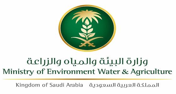 """"""" البيئة """" ترفع حظر استيراد الطيور الحية والبيض من 4 دول"""