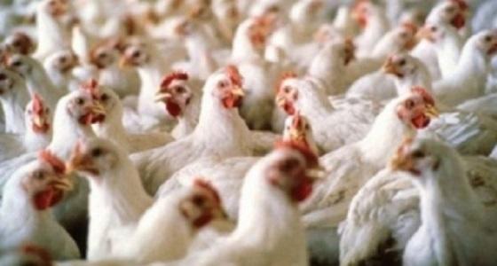 """"""" البيئة """" ترفع الحظر عن استيراد منتجات الطيور من 4 دول"""