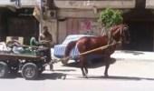 بالفيديو.. حصان يرقص على أنغام اغنية شعبية