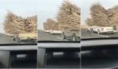 بالفيديو.. سيارات الاحتطاب الجائر تتحدى القوانين