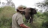 فيديو صادم لرجل يقف أمام فيل غاضب بشجاعة