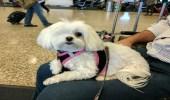 كلبة بعين واحدة تذهب في رحلات ترفيهية بأمريكا