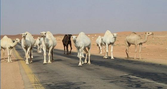 بلاغ مواطن يمنع حواث سير بطريق مكة المتجه للطائف