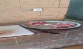 كميات من الصراصير والحشرات داخل مصنع حلويات بعسير