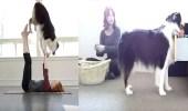 بالفيديو.. كلبة تقوم بالأعمال المنزلية لصاحبتها