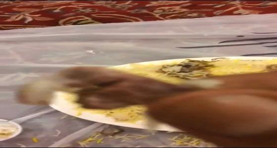 أمانة جدة تبحث صحة مقطع فيديو للحوم مقرحة بمطعم شهير