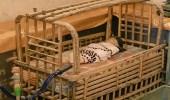 صورة نادرة لسرير الأطفال بالخليج قديما
