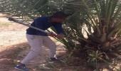 بالصور.. تدشين حملة لمكافحة سوسة النخيل الحمراء في مزارع الدوادمي