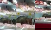 بالفيديو.. قطة تقتحم ثلاجة أحد المتاجر الشهيرة بحفر الباطن