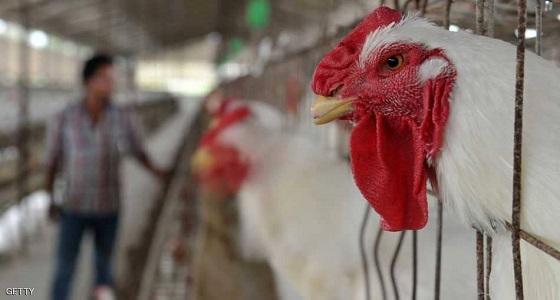 """اكتشاف سلالة """" شديدة العدوى"""" من إنفلونزا الطيور"""