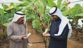 بالصور.. مواطن ينجح في زراعة الموز بالقصيم