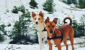 بالصور.. كلبان يتركان شوارع مصر للعيش في السويد