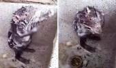 """بالفيديو.. علماء يوضحون حقيقة """" الفأر المستحم """""""