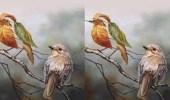 تفسير رؤيتك لرسم عصافير يكشف مصير حياتك العاطفية