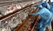 اليابان: ظهور أول حالة إصابة بأنفلونزا الطيور