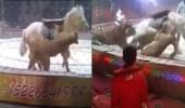 حصان ينجو من هجوم أسد ونمر