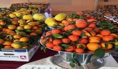 افتتاح مهرجان الحمضيات الثاني بحريق الرياض