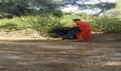 بالصور.. حملة نظافة بمحافظة هروب