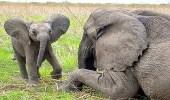تسمية أنثى فيل في كينيا على اسم زوجة رئيس الوزراء الكندي