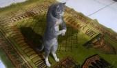 """"""" مكافحة الإشاعات """" تكشف حقيقة فيديو القط المصلي"""