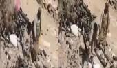 بالفيديو.. لقطات للجيش اليمني والمقاومة من المعركة الدائرة بالبيضاء