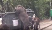 بالفيديو.. حيوان بري ضخم يثير الذعر بالطريق العام