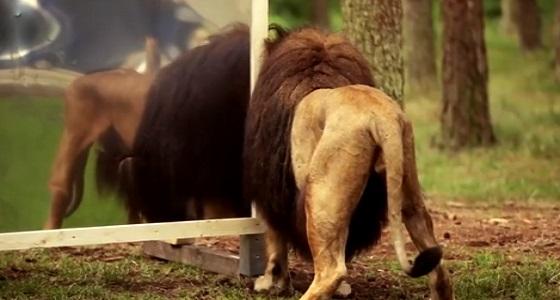 بالفيديو.. رد فعل صادم لحيوانات تشاهد نفسه بالمرآة لأول مرة