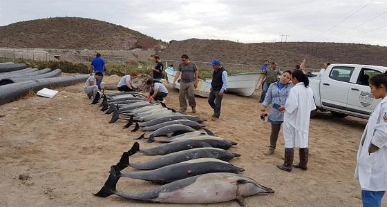 انتحار عشرات الدلافين تعرضت لهجوم شرس داخل البحر