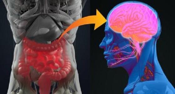 بكتيريا الأمعاء تحافظ على الذاكرة و تجعلك تعيش عمر أطول